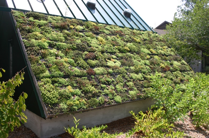 Green Roof at the Virginia Living Museum in Newport News, Virginia by Ryan Somma