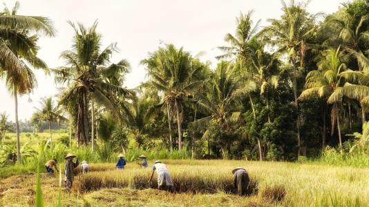 indonesia-570647