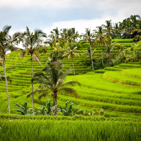 Around 50 percent of Indonesia's population continues to live in the rural areas with agricultural contributing 15 percent of GDP